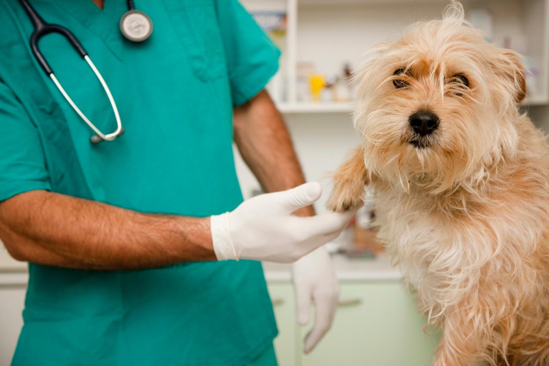 dermatología para mascotas