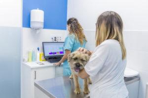 Especialización en dermatología para mascotas